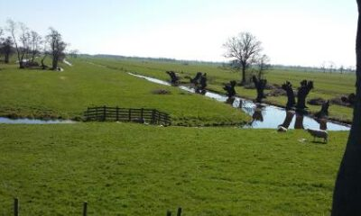 Afbeelding voor Mooie plaatjes uit Bodegraven Reeuwijk